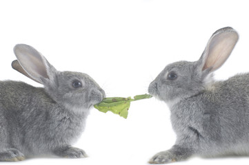 Close up two bunny and a vegetable leaf