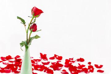 red rose on valentine day