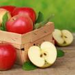 Frisch gepflückte Äpfel in einem Korb