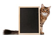 Cat with blackboard