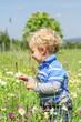 Blumenwiese erkunden