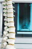 wirbelsäule mit röntgenbild