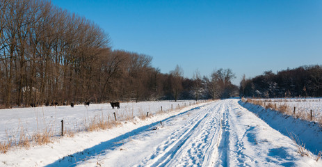 Snowy country road between the meadows