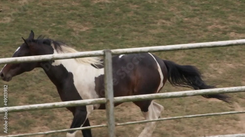 Galloping horse in the corral