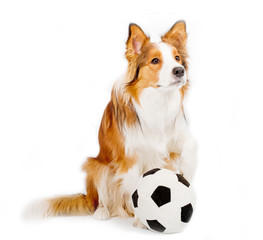 dog with ball isolated over a white background