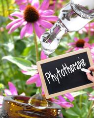 Phytotherapeutika Kreidetafel