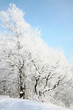 Snow tree on blue sky background
