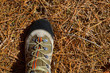 Hicker explorer feet boot detail on pine dried needles