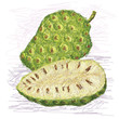 noni fruit cross-section