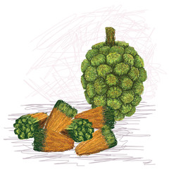 pandanus fruit kernels