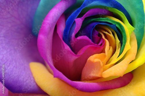 Foto op Canvas Macro Close up of rainbow rose heart