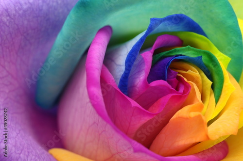 Fotobehang Macro Close up of rainbow rose heart