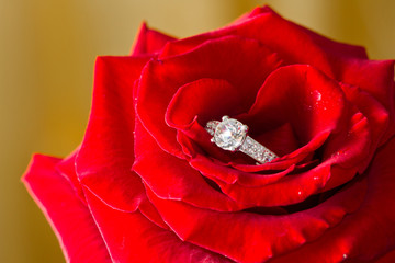 Golden diamond ring and rose