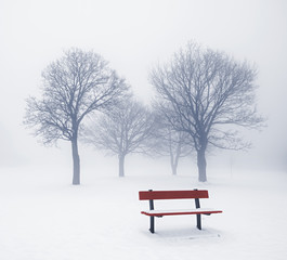 Winter trees and bench in fog