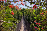Fototapety Footpath in jungle - Tenerife Canary islands
