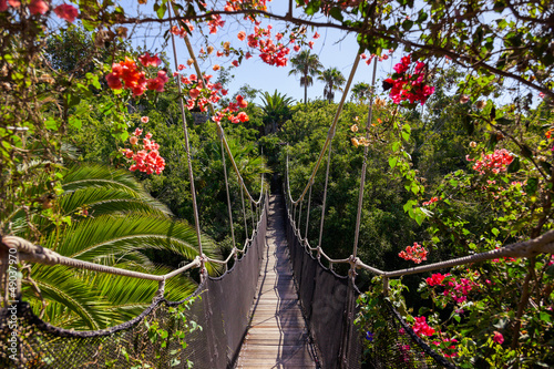 Footpath in jungle - Tenerife Canary islands