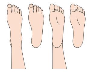 ボディパーツ足の甲と足の裏