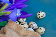 quail eggs and irises on blue table