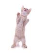 Katzenbaby steht auf den Hinterpfoten
