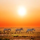 Fototapete Saeule - Savanna - Säugetiere