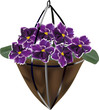 dark violet flowers in flowerpot