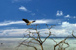 A blue black heron in a tropical paradise background