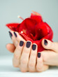 Cupped hands with manicure holding red flower side view