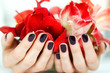 Closeup hands with dark manicure holding bright red flowers