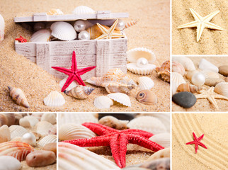 Collage of summer seashells.  collection of seashells.