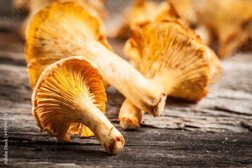 chanterelle mushrooms. Objects on white background.chanterelle m