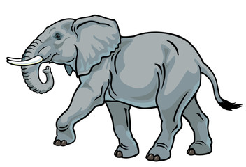 elephant on white