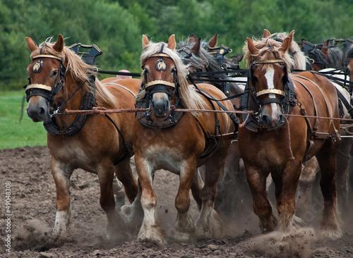 Arbeitspferde im Einsatz