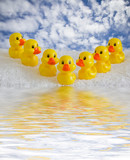 rubber ducklings