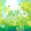 Light_background-green_b