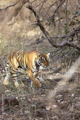 Fototapeten,tier,tiger,tigerbad,bengal