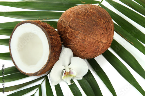 Coconuts with leaves and flower, close up