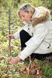 Woman gathering wild mushrooms poster
