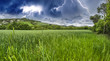 Green field under blue sky. Beautiful nature background