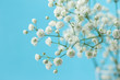 Gypsophila (Baby's-breath flowers)