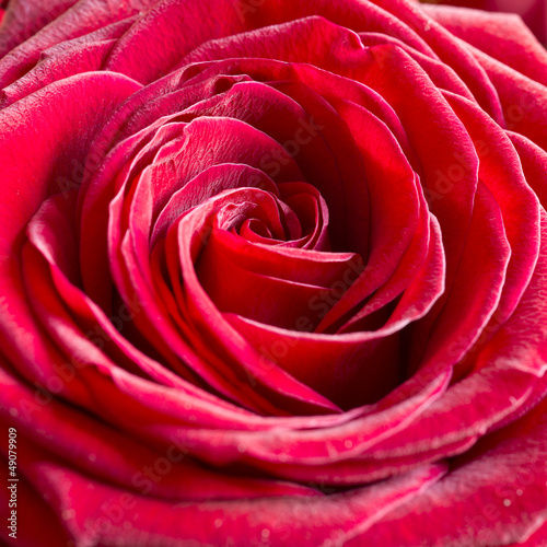 Sticker Bright Pink Rose Background
