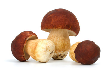 three boletus edulis isolated on white background close up