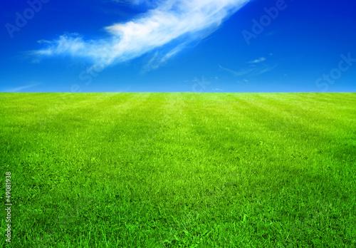 Fototapeten,gras,feld,grün,wiese