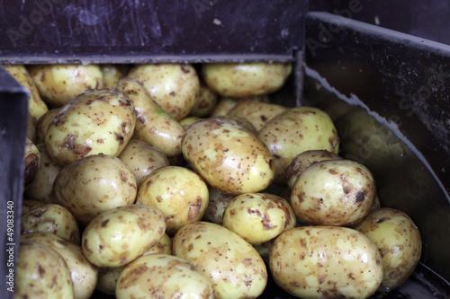 Kartoffeln in einer Waschanlage