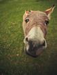 Kleiner Grauer Esel