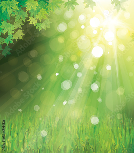 Vector of green leaves on sunny  background.