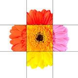Colorful Gerbera Marigold Flower Mosaic Design