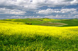 Scenic view of typical Tuscany spring time landscape