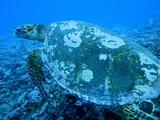 Fototapete U-boot - Polynesien - Fische