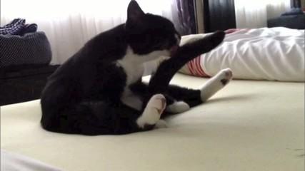 Kater sitzt auf dem Bett und putzt seinen Schwanz