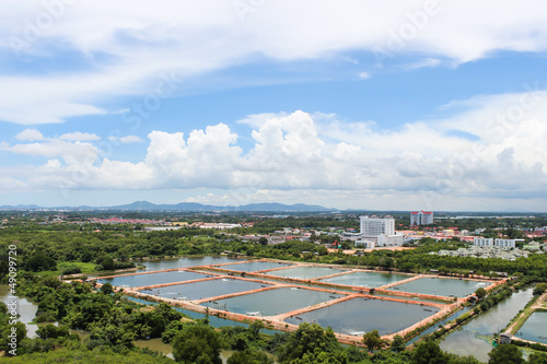 The Shrimp farming